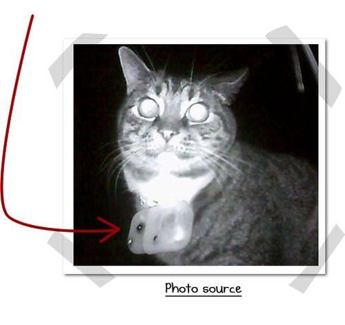 Cam_cat